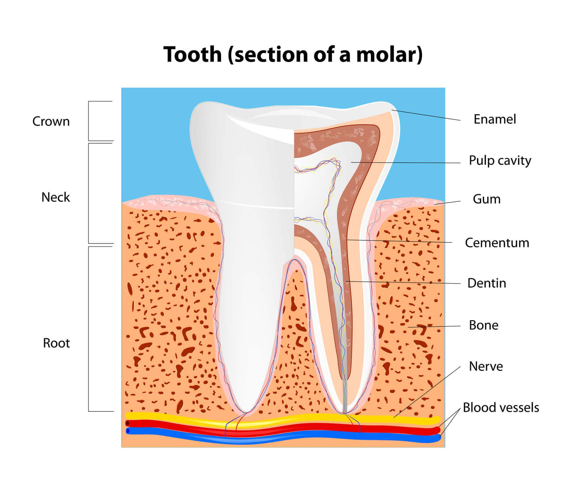 Where can I find an Aventura Dentist?